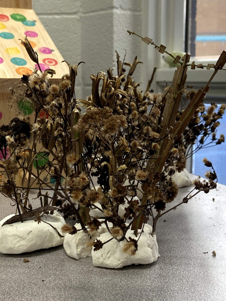 collections of dried plants placed in clay bases to resemble small trees