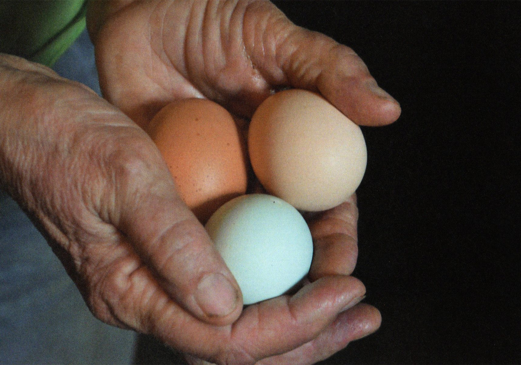 photograph of weathered hands holding three eggs, a brown egg, tan egg, and blue egg